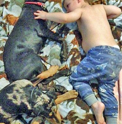 CORNNING 9-25-16bed sleep 2 pups & BOY