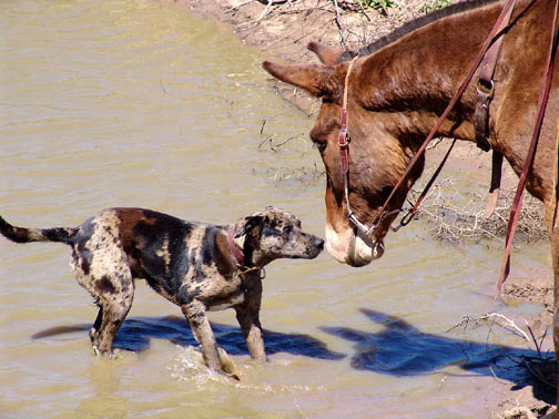 Mule and Goober Nose to Nose