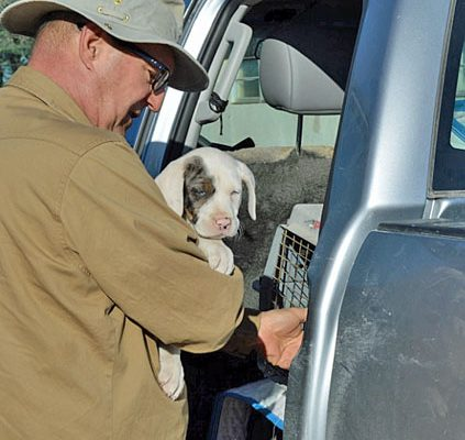Elton wylie & CXE male pup