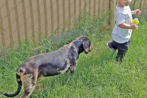Tuten pup walk his child joinup 3 days 8-6-16