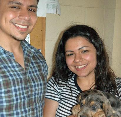 Xenia & brother buyerBXF pups 5-11-14_063